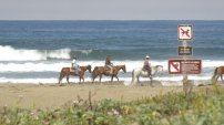 jazda kona brzegiem morza