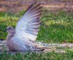 ptak-obrazek